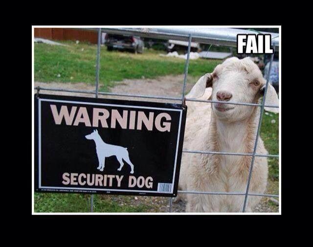 Home security #fail #funny guard dog | Home Security Fails ...