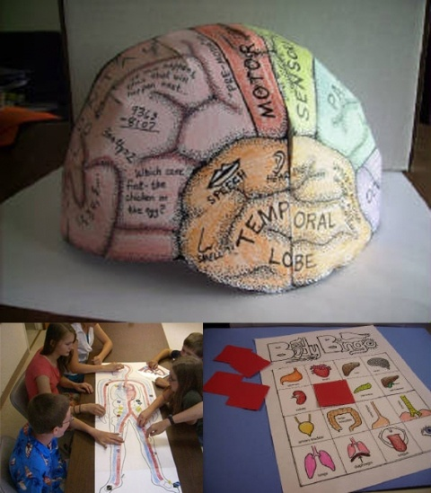 50 best Teaching - Human Anatomy images on Pinterest | The human ...