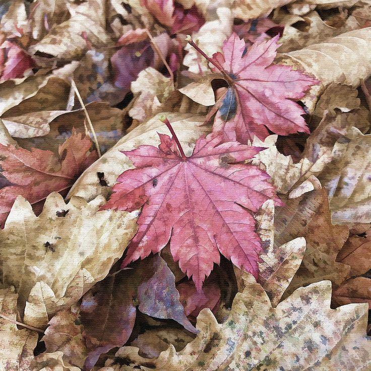 Maple Mixed Media - Autumn Mood by Mariia Kalinichenko #MariiaKalinichenkoFineArtPhotography #Autumn #Maple #FineArtPrint #FineArtPhotography
