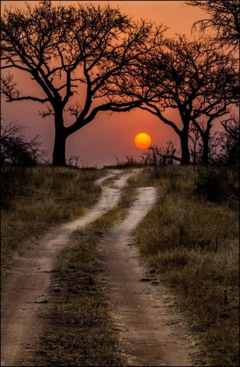 crescentmoon06: Pathway to the sun - Kruger National Park, Africa (by Timothy Griesel)