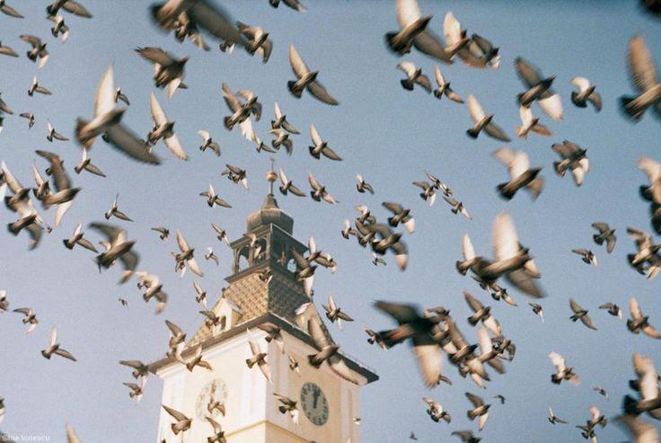 take flight brasov, older  copyright: Ina Ionescu