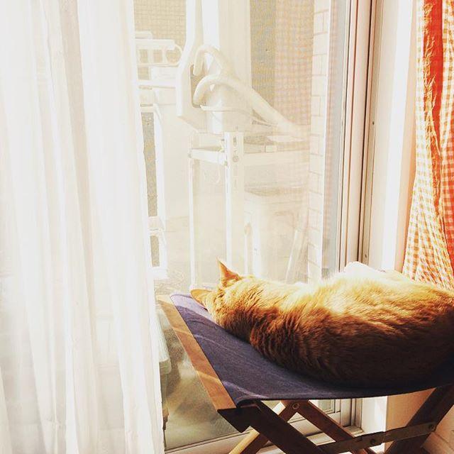 . 光合成中  #cat #ねこ #猫 #ネコ #ilovecat #茶トラ #かわいい #ねこすたぐらむ #catlover #catstagram #ねこら部 #にゃんこ #ねこバカ #茶トラ男子部 #愛猫 #溺愛 #かわいすぎて #moi #モイ