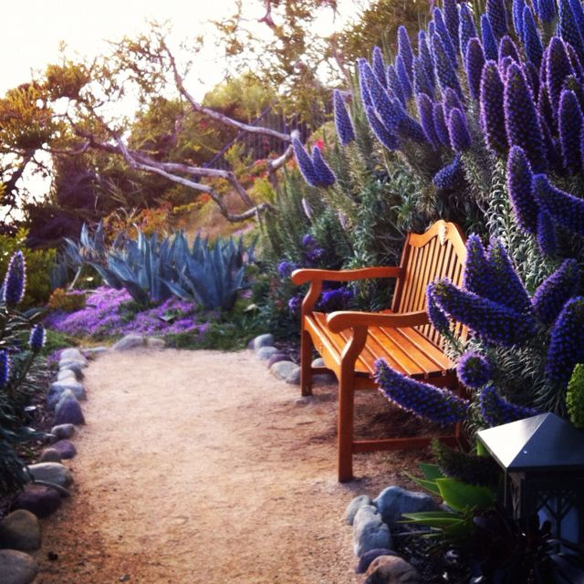 Echium...can you imagine sitting here in the cool of the morning or evening and reflecting...I could...
