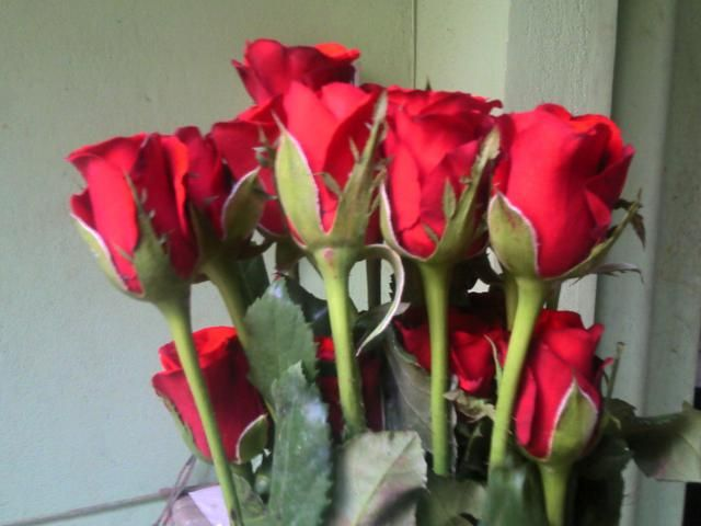 Red Roses  for sale  Roses are best known as ornamental plants grown for their flowers in the garden and sometimes indoors.   for more details: http://www.agribazaar.co/index.php?page=item&id=1979