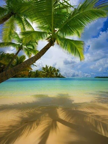 A collection of tropical beach pictures -Bavaro Beach Punta Cana