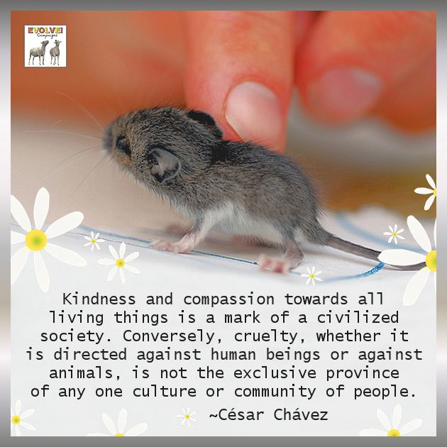 kindness towards animals Kindness is one of them when you are a kind person, you're not only helping others, you are helping yourself, too there's substantial scientific evidence that being kind makes you -- and others around you -- happy.