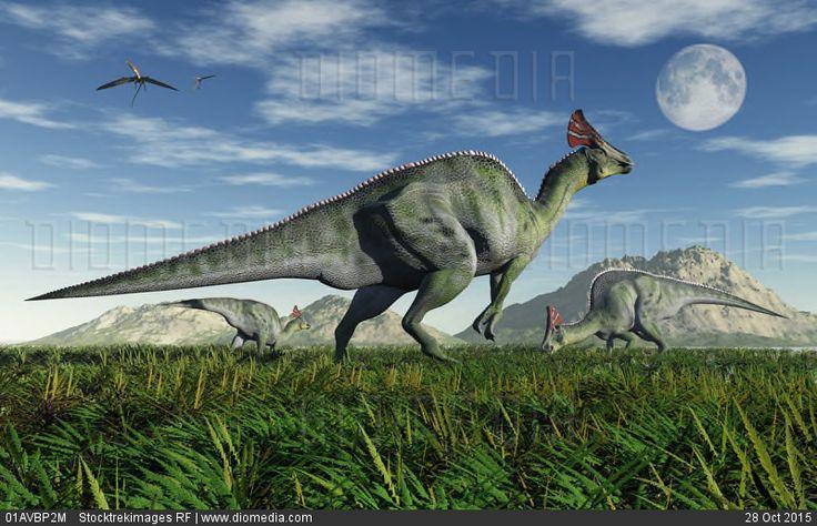 Olorotitan duckbill dinosaurs grazing. - stock photo