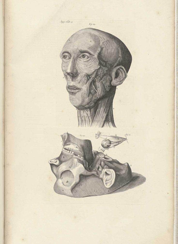 Cowper, William (1666-1709 https://pinterest.com/pin/287386019943684726/): The anatomy of humane bodies, 1698  (https://pinterest.com/pin/287386019947266740).