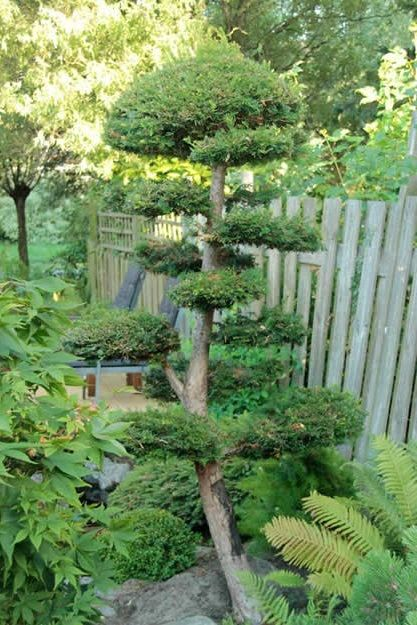 17 best images about japanese garden on pinterest for Japanese garden plants and trees