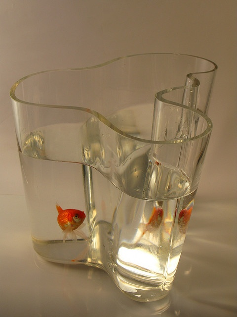 38 best images about fish bowl ideas on pinterest fish for Best fish for bowl