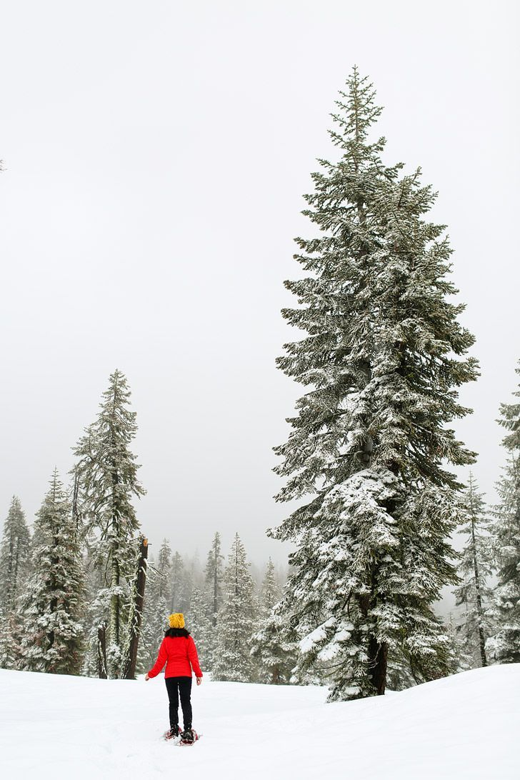 Snowshoeing at Badger Pass, Yosemite National Park, California. See more photos and tips for your visit during winter // localadventurer.com
