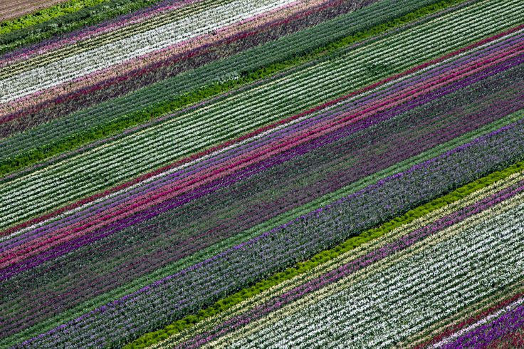 Flower Fields I, Lompoc, CA 2013 l Alex S. MacLean: Aerial Photography