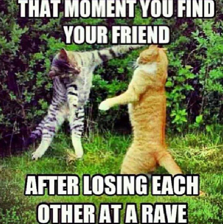 Rave Cat - Stolen from Rave Memes FB pg
