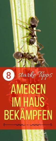 Cool Ameisen im Haus bek mpfen Haushaltsfee org