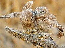 Lovely Credit photo Vladimir Kogan