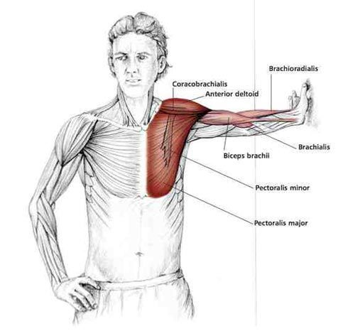 Parallel Arm Chest Stretch