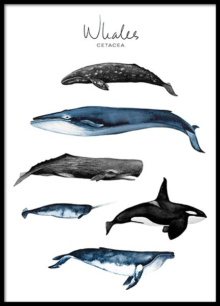 Whales Poster in the group Prints / Sizes / 50x70cm | 20x28