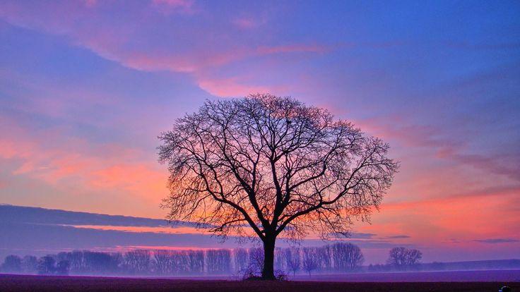 Landscape Photography Trees | Inspiring landscapes ...