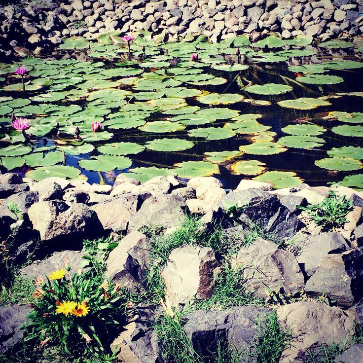 lotus garden/iphone5s