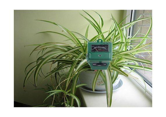 La importancia del pH, en el agua y en el sustrato - http://www.jardineriaon.com/la-importancia-del-ph-en-el-agua-y-en-el-sustrato.html