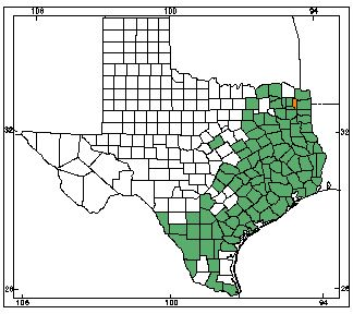American Alligator Texas Counties With Gators