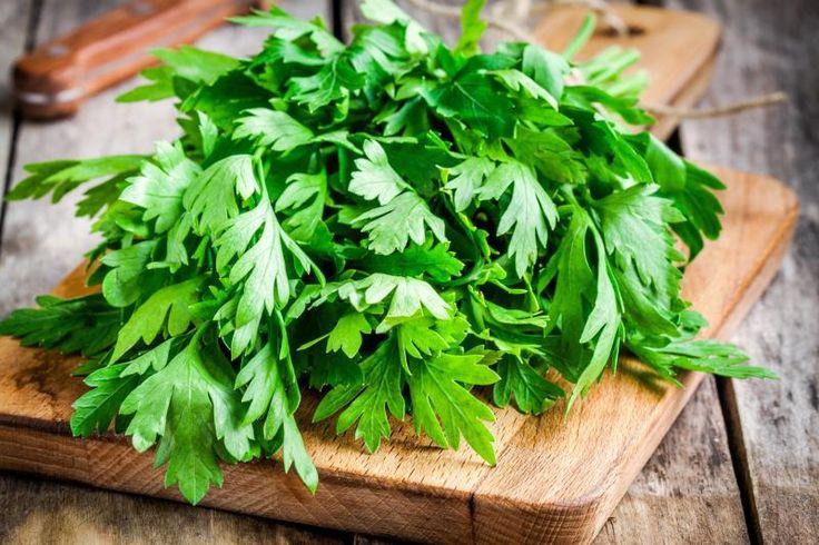 How to freeze fresh cilantro freezing fresh herbs