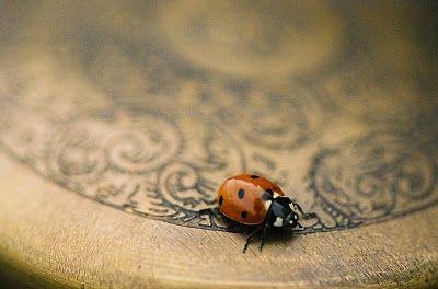 Flowerwild DesignsLife, Ladybugs, Animal