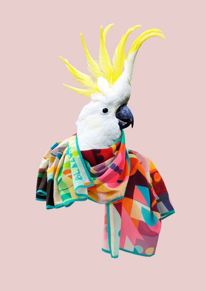 The UK-based boutique Blazon debuts a Fall scarf collection