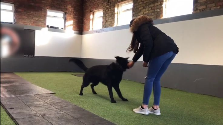 We specialise in all breeds of Protection Dogs and Working Dogs such as German Shepherds, Dobermans, Rottweilers, Presa Canarios, Boxers, Cane Corso, and Giant Schnauzers. Our protection dogs for sale are trained exactly to the customer requirement. This can be either as a family protection dog, personal protection dog, or a security dog.