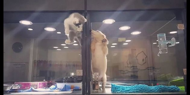 #Kitten Escapes #Pet Store Display To Play Its Lonely #Dog Friend