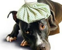 Pets and poisons: what you need to know. #Examinercom
