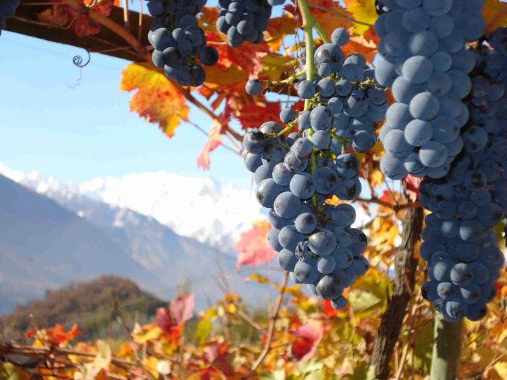 Consorzio tutela dei vini D.O.C. Colli di Parma