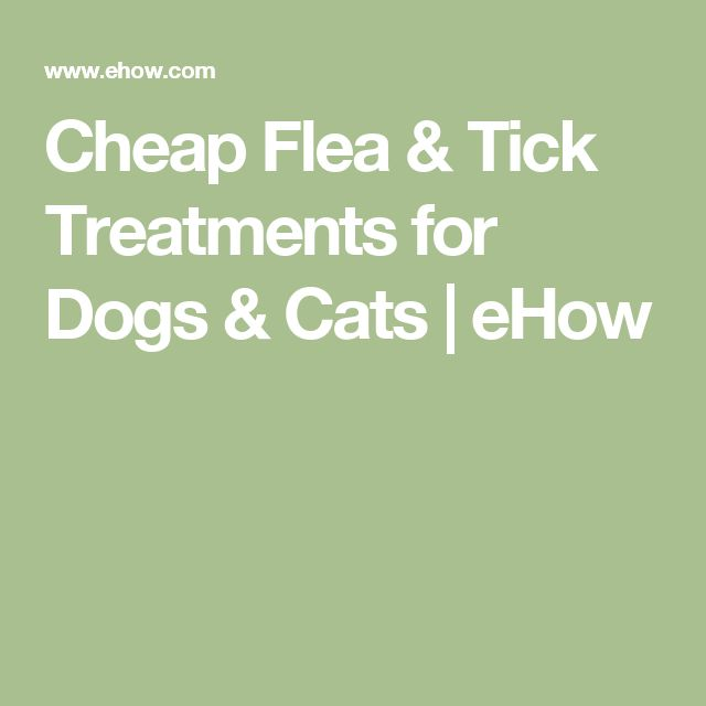 Cheap Flea & Tick Treatments for Dogs & Cats | eHow