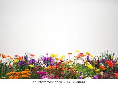 Kostenloses Bild auf Pixabay – Frühlingsblumen, Blumen, Collage   – Malvorlagen Frühling