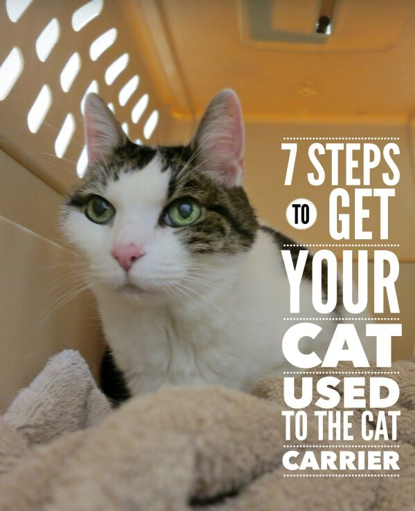 Try these 7 steps to get your cat used to the cat carrier, and hopefully the hissing, growling and clawed attacks will become a thing of the past.