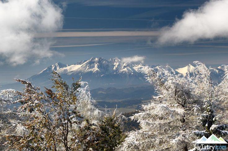 W Tatrach niedźwiedzie wybudzają się z zimowego snu