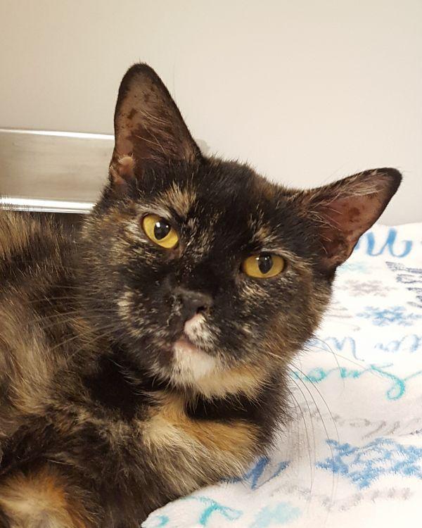 Cats For Adoption Petfinder Cat Adoption Pets Pet Adoption