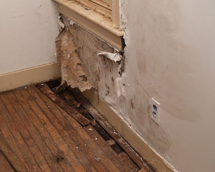 Image result for Mold Damage Repair Northern Los Angeles CA