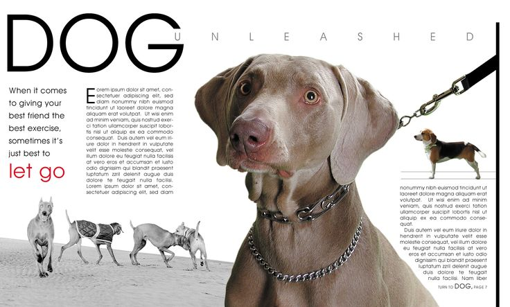 : Graphic Design, Dog Magazinespread, Article, Spread Inspiration, Concept Design, Magazine Layout, Google Search, Magazine Spreads, Design Spreads