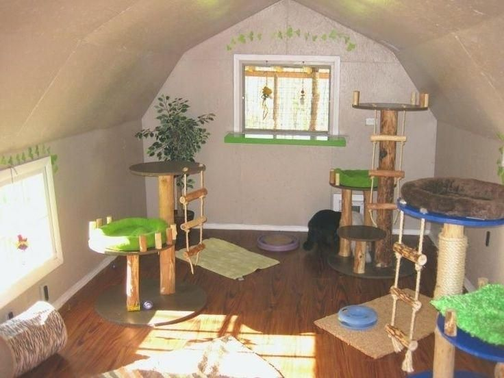 Rooms Built For Cats Outdoor Screen Rooms For Cats Cat Room Ideas Cat Room  Home Ideas