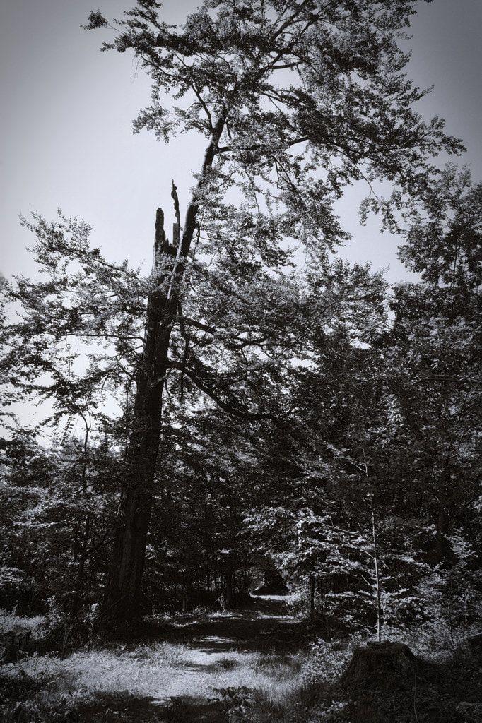 bwstock.photography  //  #tree