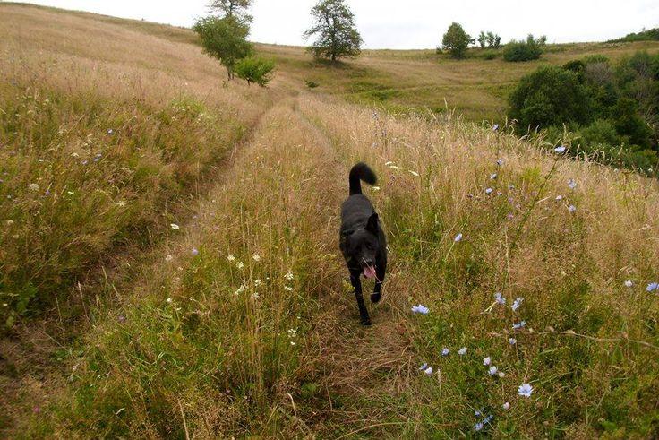 Nero, my #free #happy #dog on the road