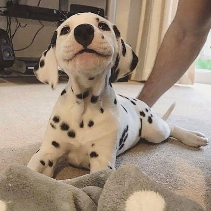 Sehen Sie sich das Lächeln dieses kleinen Herrn an.
