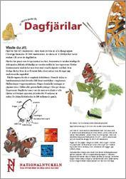 Lärarguide om dagfjärilar