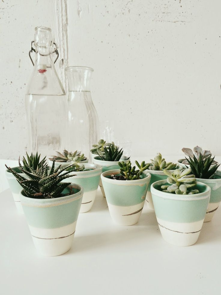 Cacti And Mint