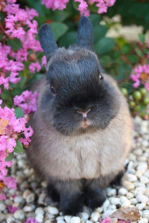 Spring Visitor in Garden ✿⊱╮