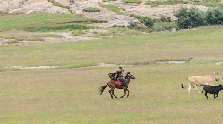 Boy chasing cattle on horse back by Fezekile Futhwa on www.digitalgallery.co.za