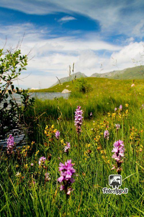 Foto di di Maria Chiara Mazzini - scattata da Lago della Bargetana