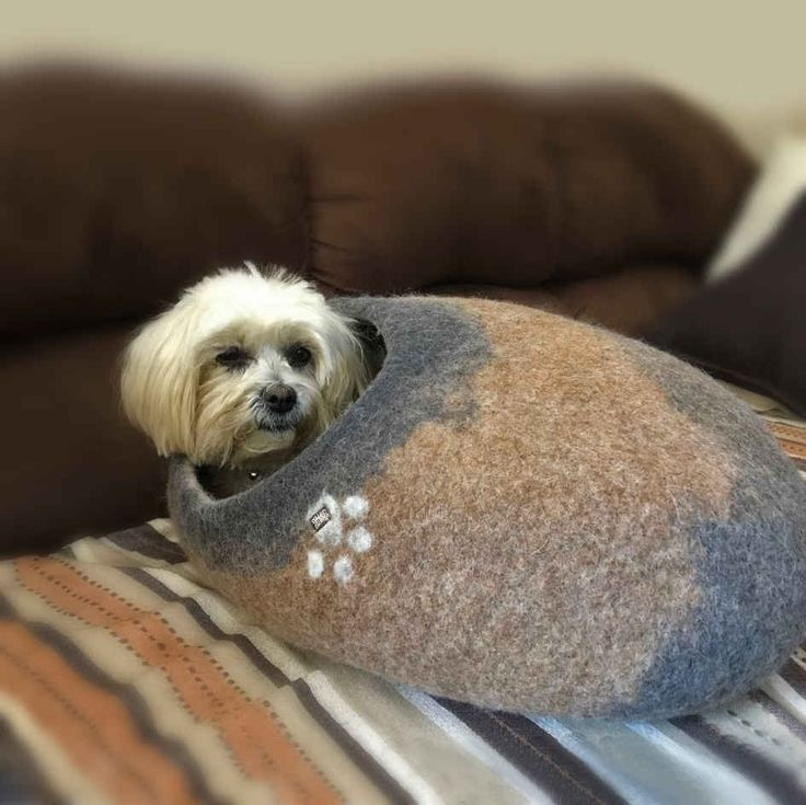 Oval cave for little dogs by Wooppers