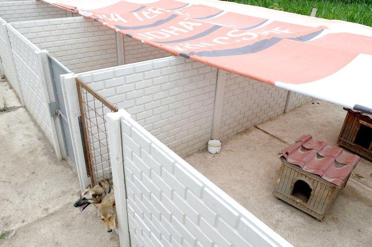Különleges adomány a kutyamenhelynek. Árnyékolókat kapott a kisvárdai Ugat-Lak Alapítvány a CIB Bank jóvoltából.  #kutya #dog #hírek #állatvédelem #dogshelter #kutyabaráthelyek